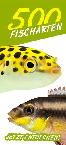 270 Fischarten in unseren Fisch-Kategorie